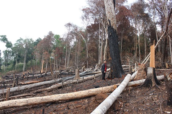 Dak Nong, heavy deforestation, illegal logging