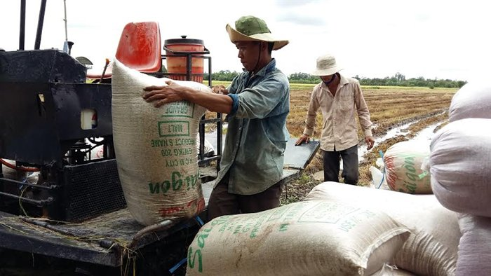 Vietnam expects higher prices for rice after Philippines bid