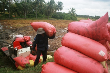 Vietnamese farmers suffer from price fall