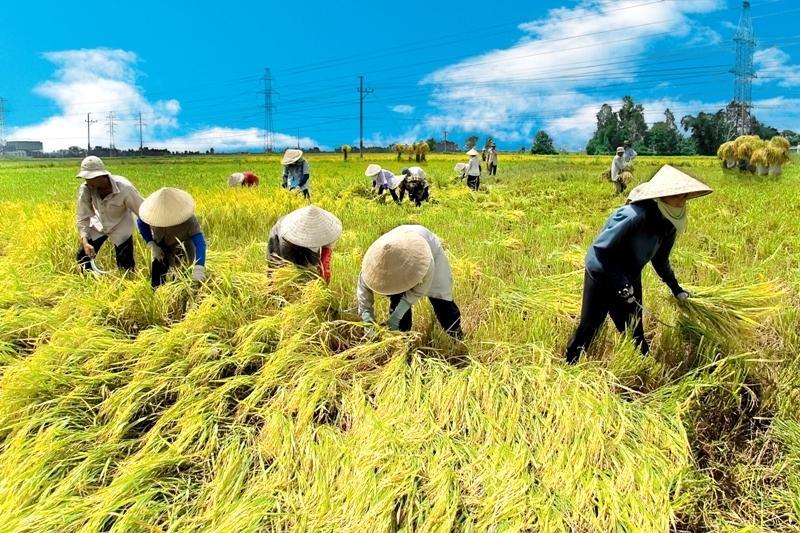 Vietnam, MARD, farm produce, FTAs
