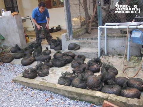 Vietnam, wildlife, rescue center, laws