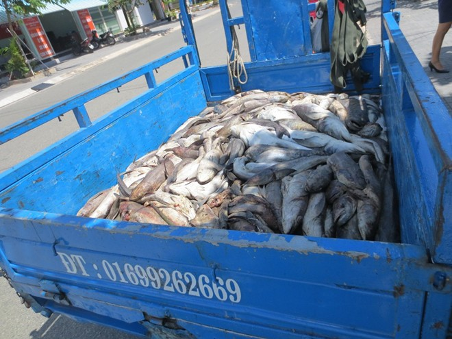 Residents carry dead fish to gov't office to protest pollution