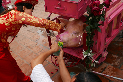 Culture Ministry to persuade locals to not organise pig-chopping ritual