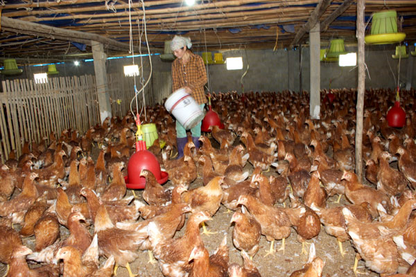 TPP will test Vietnam's agriculture restructuring