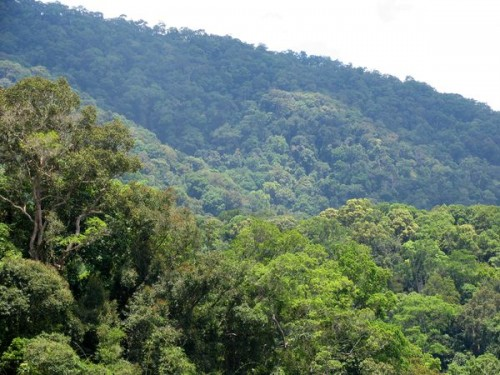 Locals quit jobs to protect area forests