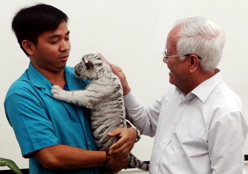 Saigon Zoo wants tiger exchange, white tigers
