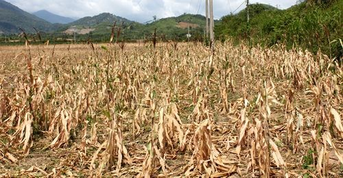 Central region still affected by drought, salinization