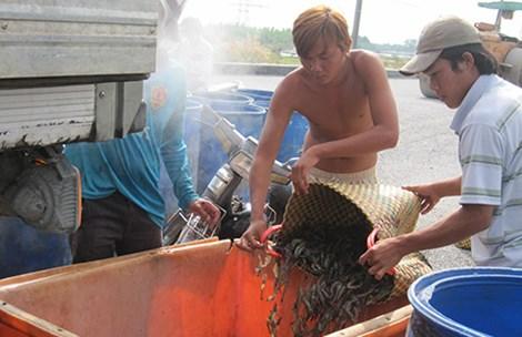Vietnam, Vietnam seafood market, China, Vietnam-China trade, vietnam economy, vietnamnet bridge, english news about Vietnam, Vietnam news, news about Vietnam, English news, vietnamnet news, latest news on vietnam,  Vietnam