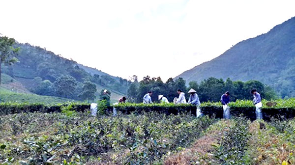 Tea culture to shine at festival