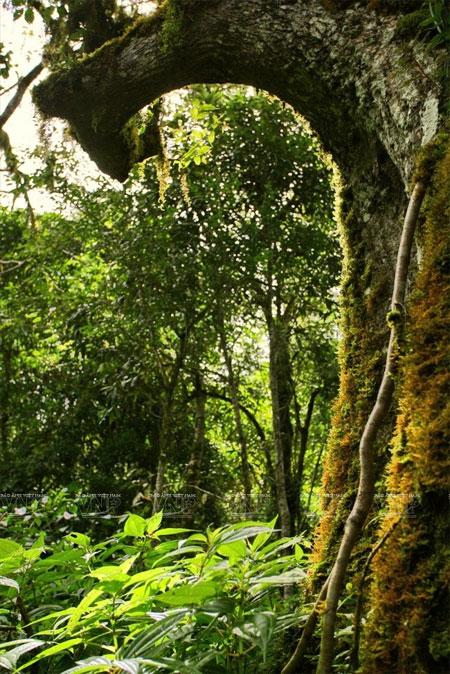 Lang Biang Mountain, rare species, fauna and flora, Vietnam economy, Vietnamnet bridge, English news about Vietnam, Vietnam news, news about Vietnam, English news, Vietnamnet news, latest news on Vietnam, Vietnam