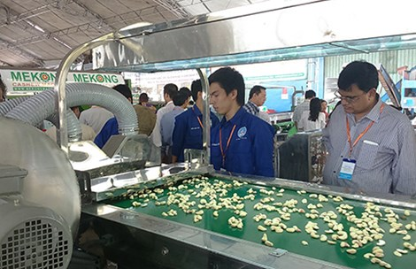 Vietnam, cashew nut, Vietnamese technology, export turnover, vietnam economy, vietnamnet bridge, english news, Vietnam news, news Vietnam, vietnamnet news, Vietnam net news, Vietnam latest news, Vietnam breaking news,