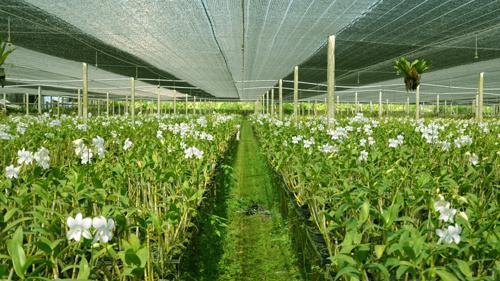 Vietnam hi-tech zones aim to improve farming sector