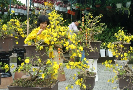 Vietnam may lack flowers, fruits for Tet due to strange weather ...