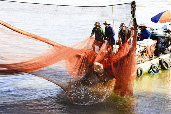 Linh fish, flooding season, Mekong Delta, Vietnam economy, Vietnamnet bridge, English news about Vietnam, Vietnam news, news about Vietnam, English news, Vietnamnet news, latest news on Vietnam, Vietnam