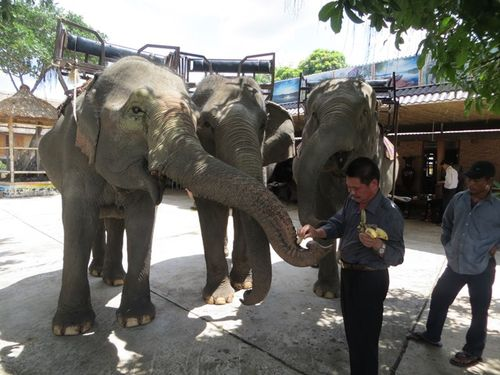 The man who owns the most elephants in Central Highlands