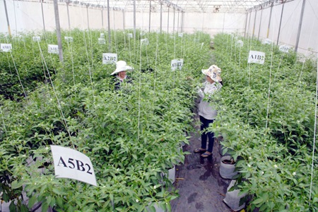 Criteria set for high-tech agriculture areas