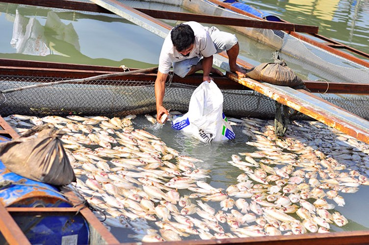 Over 100 tons of dead fish in Dong Nai River, pollution in dong nai river, dead fish, social news, vietnamnet bridge, english news, Vietnam news, news Vietnam, vietnamnet news, Vietnam net news, Vietnam latest news, vn news, Vietnam breaking news