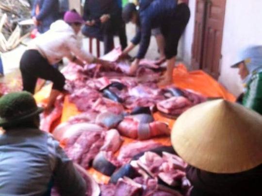 Biggest-ever giant grouper caught in Vietnam, giant fish, giant barb, social news, vietnamnet bridge, english news, Vietnam news, news Vietnam, vietnamnet news, Vietnam net news, Vietnam latest news, vn news, Vietnam breaking news