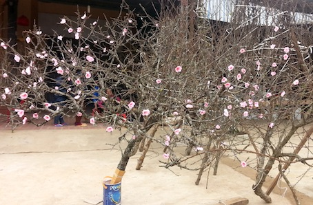 """Wild peaches destroyed by townspeople's """"elegant hobby"""""""