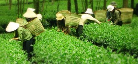 Vietnam economy, Vietnamnet bridge, English news about Vietnam, Vietnam news, news about Vietnam, English news, Vietnamnet news, latest news on Vietnam, Vietnam,  Oo lonog tea, Taiwan, PepsiCo