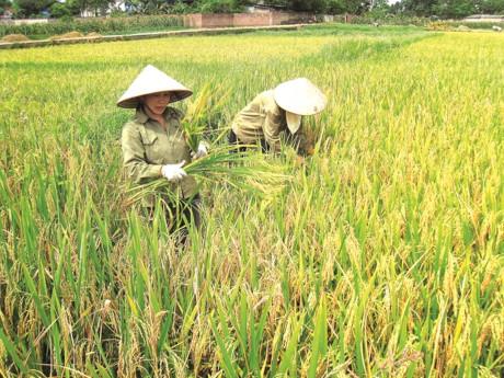 vietnam rice exports