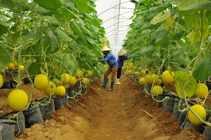 Huge capital invested in safe agricultural products, vietnam economy, business news, vn news, vietnamnet bridge, english news, Vietnam news, news Vietnam, vietnamnet news, vn news, Vietnam net news, Vietnam latest news, Vietnam breaking news