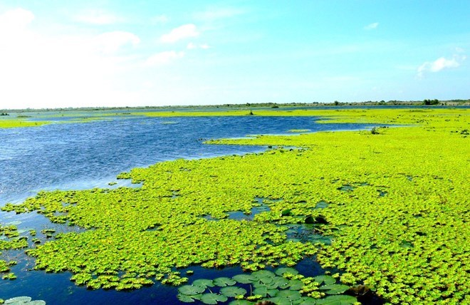 U Minh Thuong becomes Vietnam's 8th Ramsar site