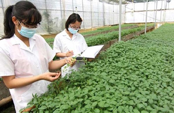 Administrative procedures hinder VN's agricultural development
