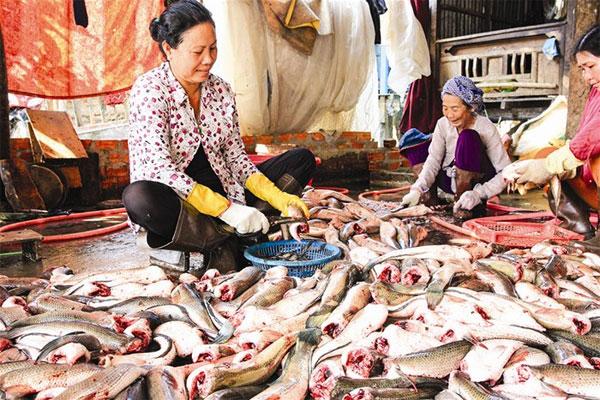 Mekong Delta, dried fish, aquatic products, Vietnam economy, Vietnamnet bridge, English news about Vietnam, Vietnam news, news about Vietnam, English news, Vietnamnet news, latest news on Vietnam, Vietnam