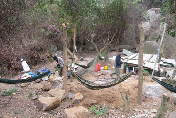 Illegal loggers, Son Tra peninsula, GreenViet volunteers, Vietnam economy, Vietnamnet bridge, English news about Vietnam, Vietnam news, news about Vietnam, English news, Vietnamnet news, latest news on Vietnam, Vietnam