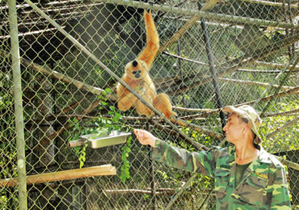 Cat Tien National Park, hunting wild animals, rescuing animals, Vietnam economy, Vietnamnet bridge, English news about Vietnam, Vietnam news, news about Vietnam, English news, Vietnamnet news, latest news on Vietnam, Vietnam