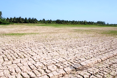 Experts seek solutions to Mekong Delta's worst drought in 100 years, drought, salination, salinity, environmental news, sci-tech news, vietnamnet bridge, english news, Vietnam news, news Vietnam, vietnamnet news, Vietnam net news, Vietnam latest news,