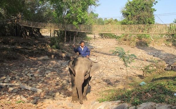 Dak Lak tourism hit by hydropower needs, Don village, dak lak, elephants, Vietnam guide, Vietnam airlines, Vietnam tour, tour Vietnam, Hanoi, ho chi minh city, Saigon, travelling to Vietnam, Vietnam travelling, Vietnam travel, vn news