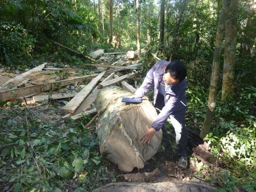 Nearly 11,000ha of Dak Lak forest destroyed, deforestation, central highlands, environmental news, sci-tech news, vietnamnet bridge, english news, Vietnam news, news Vietnam, vietnamnet news, Vietnam net news, Vietnam latest news, Vietnam breaking news,