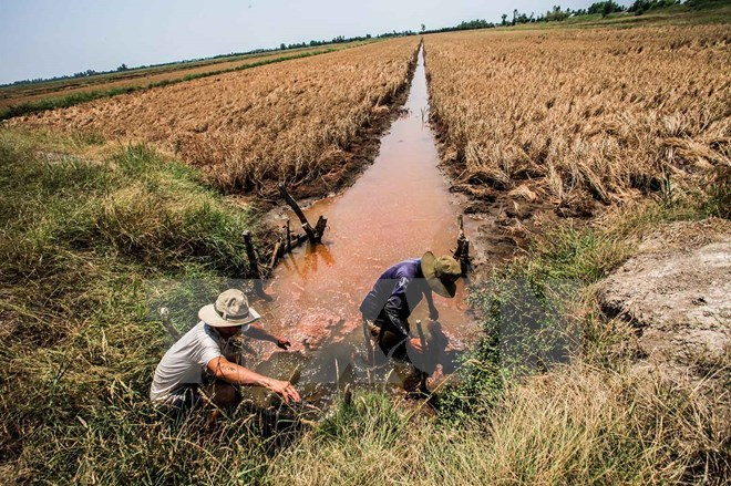 11 provinces announce drought, saltwater intrusion emergency, mekong delta, drought, natural disaster, social news, vietnamnet bridge, english news, Vietnam news, news Vietnam, vietnamnet news, Vietnam net news, Vietnam latest news, vn news