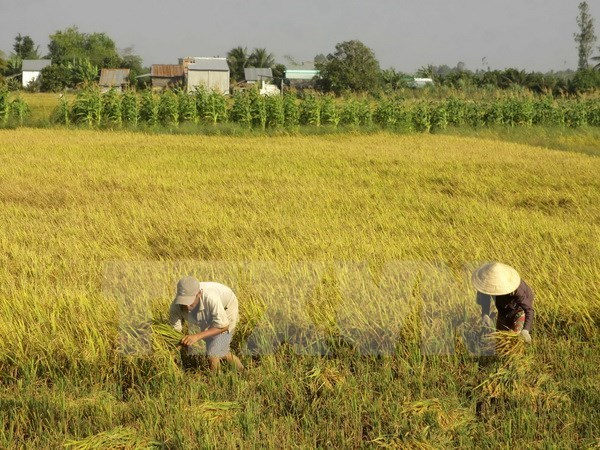 Government suggests over 3.76 million ha of land for rice farming