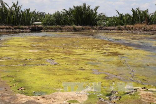 Drought, saline encroachment continue in Mekong Delta: Mekong River Commission