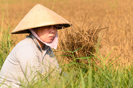 What did Vietnam do while Thailand prepared to resist drought? mekong delta, saline water intrusion, droughts, natural disaster, social news, vietnamnet bridge, english news, Vietnam news, news Vietnam, vietnamnet news, Vietnam net news