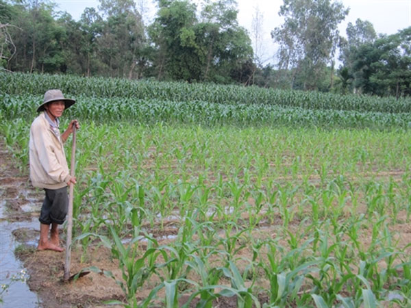 Organic farm project, sustainable farming methods, Vietnam economy, Vietnamnet bridge, English news about Vietnam, Vietnam news, news about Vietnam, English news, Vietnamnet news, latest news on Vietnam, Vietnam