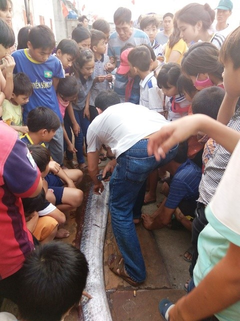 4m long giant oarfish caught in central Vietnam, social news, vietnamnet bridge, english news, Vietnam news, news Vietnam, vietnamnet news, Vietnam net news, Vietnam latest news, vn news, Vietnam breaking news