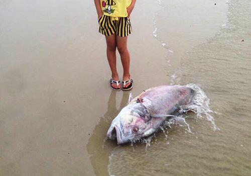 Fish die en masse along coast in central vietnam news for Fish in vietnam