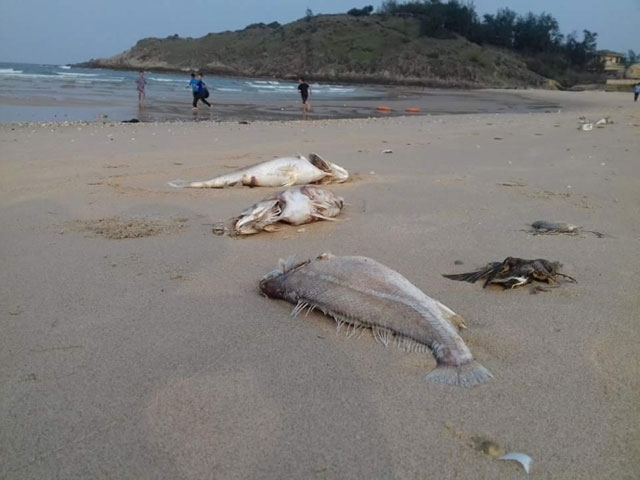 More fish deaths likely in impending hot weather, environmental news, sci-tech news, vietnamnet bridge, english news, Vietnam news, news Vietnam, vietnamnet news, Vietnam net news, Vietnam latest news, Vietnam breaking news, vn news