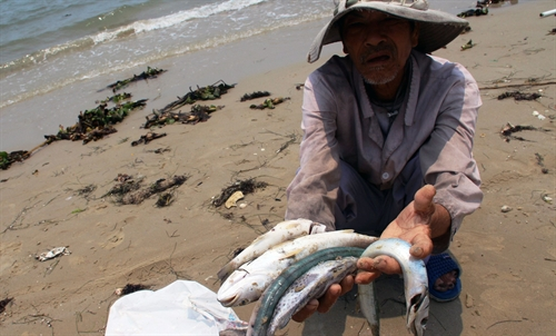 Highly poisonous toxin causes mass fish deaths in central Vietnam, formosa, pollution, environmental news, sci-tech news, vietnamnet bridge, english news, Vietnam news, news Vietnam, vietnamnet news, Vietnam net news, Vietnam latest news,