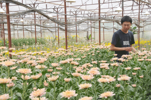 Pioneering Japanese florist from Da Lat City, social news, vietnamnet bridge, english news, Vietnam news, news Vietnam, vietnamnet news, Vietnam net news, Vietnam latest news, vn news, Vietnam breaking news