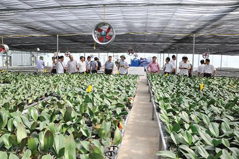Hi-tech agriculture a growing trend in Vietnam, vietnam economy, business news, vn news, vietnamnet bridge, english news, Vietnam news, news Vietnam, vietnamnet news, vn news, Vietnam net news, Vietnam latest news, Vietnam breaking news