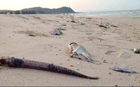 National science committee to study fish deaths
