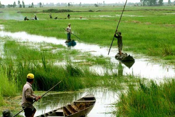 The four challenges threatening the Mekong Delta, environmental news, sci-tech news, vietnamnet bridge, english news, Vietnam news, news Vietnam, vietnamnet news, Vietnam net news, Vietnam latest news, Vietnam breaking news, vn news