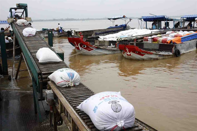 Drought, Thai sales of rice inventory pose problems for exporters