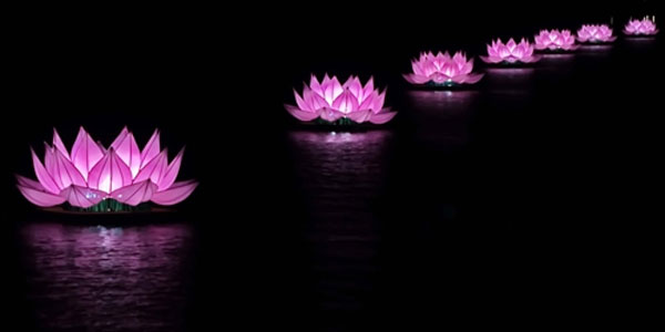 Hue event honours buddhas birthday news vietnamnet glowing lotus an installation of floating lotus flowers on the river in hue mightylinksfo