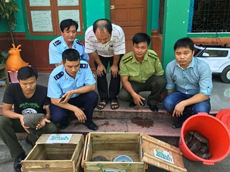 Pangolin smugglers to face up to 15 years in jail, environmental news, sci-tech news, vietnamnet bridge, english news, Vietnam news, news Vietnam, vietnamnet news, Vietnam net news, Vietnam latest news, Vietnam breaking news, vn news